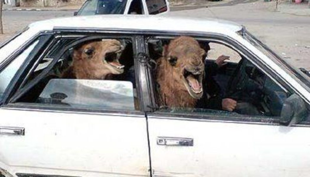 Automation Argument : Two Camels in a Tiny Car
